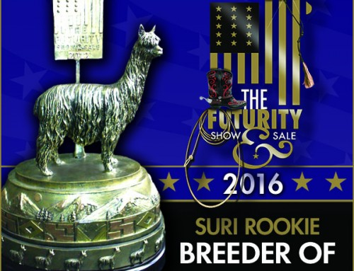 2016 Suri Futurity Rookie of the Year Small-size Farm