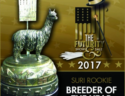 2017 Futurity Rookie of the Year Medium-size Suri Farm