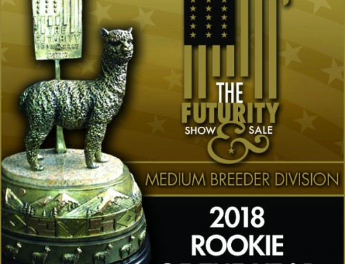 2018 Huacaya Medium Rookie of the Year