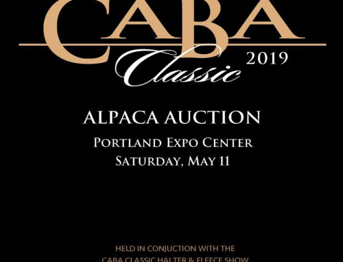 CABA Classic Alpaca Show and Auction — THIS SATURDAY May 11th