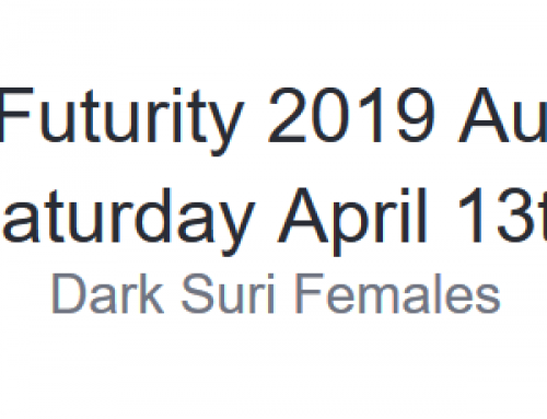 The Futurity 2019 Auction Saturday April 13th Dark Suri Females