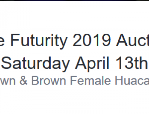 Fawn & Brown Female Huacaya — The Futurity 2019 Auction Saturday April 13th