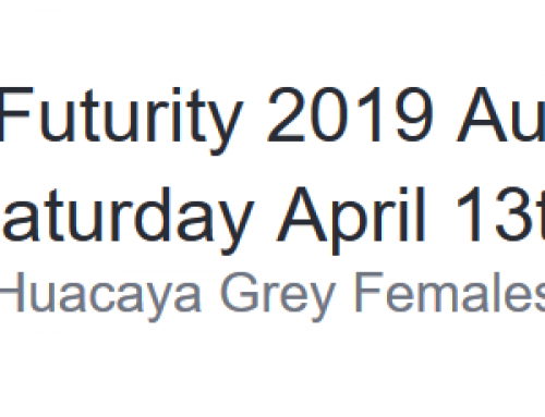 The Futurity 2019 Auction Saturday April 13th Huacaya Grey Females