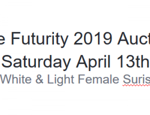 White & Light Female Suris @ The Futurity 2019 Auction Saturday April 13th