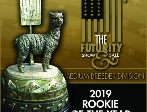 2019 Huacaya Medium Rookie of the Year