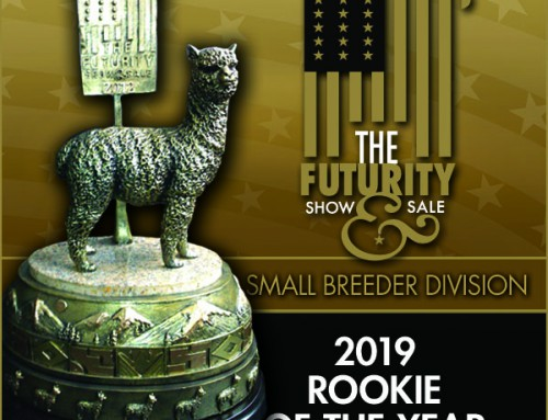 2019 Huacaya Small Rookie of the Year