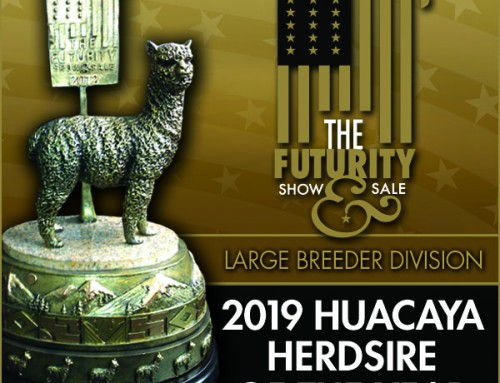 2019 Huacaya Herdsire of the Year Large Breeder Division