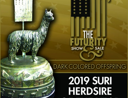 2019 Suri Herdsire of the Year Dark Colored Offspring